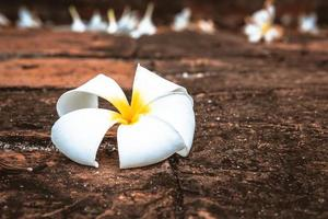 Nahaufnahme einer weißen Plumeria