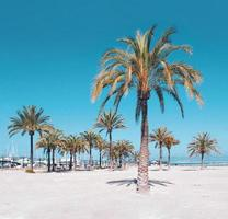 Palmen am Strand foto