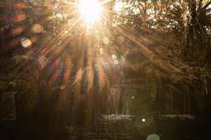 Sonnenlicht durch Bäume