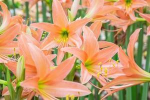 Nahaufnahme von orange Blumen in einem Garten