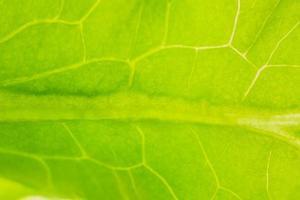 grünes Blattmuster