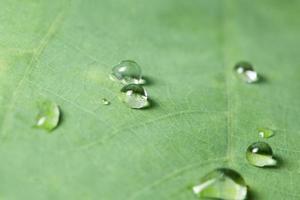 Wassertropfen auf ein Blatt