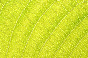 gelbes Blattmuster