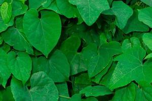 Muster der grünen Blätter foto