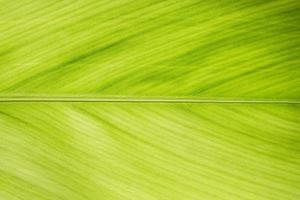 Nahaufnahme eines grünen Blattes foto