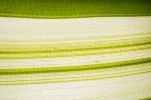 grünes und weißes Blattmuster