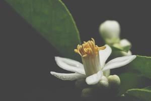 dunkler Blumenhintergrund