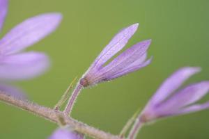lila Blumen auf grünem Hintergrund