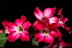 rote Blumen auf schwarzem Hintergrund