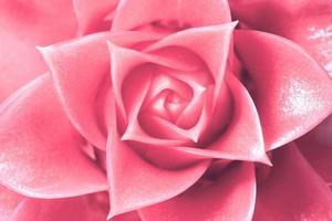 hellrosa Blumenhintergrund