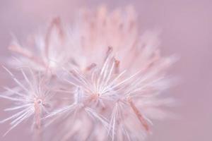 Wildblumen-Nahaufnahmefoto
