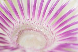 lila und weißer Blumenhintergrund