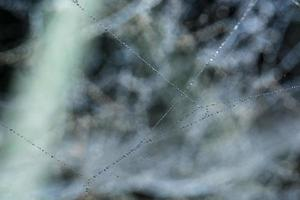 Wassertropfen auf das Spinnennetz, Nahaufnahme