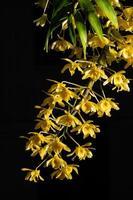 gelbe Blume auf schwarzem Hintergrund