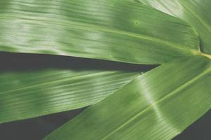 grüner Blätterhintergrund