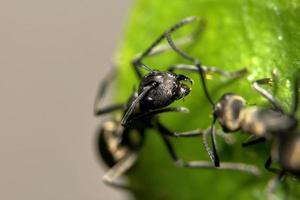 Ameisen auf einer Pflanze
