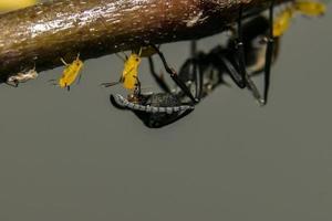Ameise auf einer Pflanze
