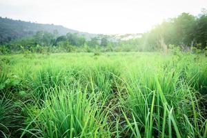 grüne Wiese während des Tages