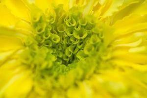 gelber Ringelblumenblumenhintergrund