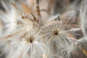 weiße Blume Nahaufnahme