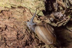 Schnecke auf einem Baum