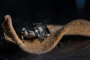 Spinne, Nahaufnahmefoto