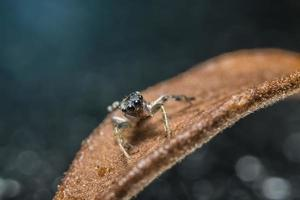 Spinne auf einem trockenen Zweig