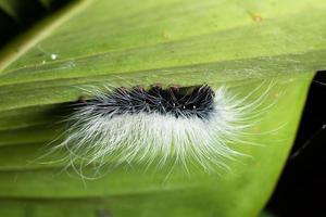 Wurm auf einem Blatt