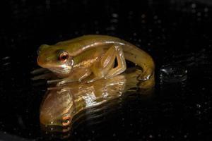 Frosch auf schwarzem Hintergrund