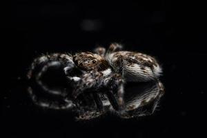 Spinne auf schwarzem Spiegel