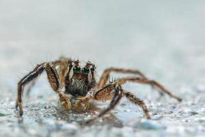 Spinne auf nassem Hintergrund