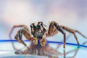 Spinne auf reflektierendem Hintergrund