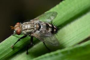 fliege auf grünem Blatt