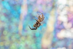 Spinne auf buntem Hintergrund