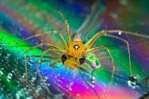Spinne auf einem reflektierenden Hintergrund