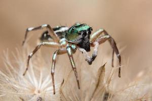 Spinne auf einer Blume