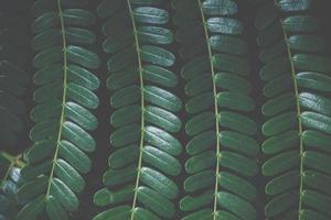 grüner Blatthintergrund