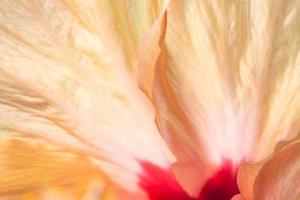 orange Blütenblätter