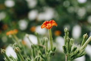 Nahaufnahme einer orange Blume foto
