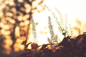 Grasblume Nahaufnahme Weichzeichner ein wenig wildes Blumengras in Sonnenaufgang und Sonnenunterganghintergrund foto
