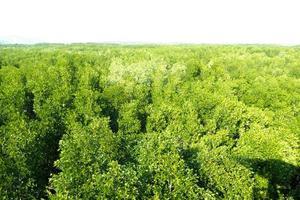 grüne Bäume vor einem weißen Hintergrund