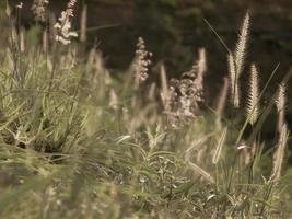 grüne Wiese auf dem Hintergrund der Berge. Sonnenaufgang im grünen ländlichen Feld