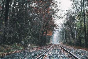 Hirsche in der Nähe von Bahngleisen foto