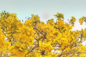 gelbe Blütenblüten foto