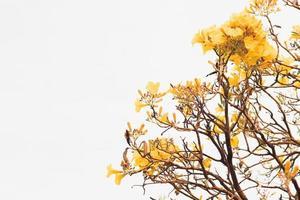 gelbe Blätter an einem Baum foto
