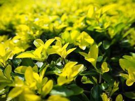 grüne frische Pflanzengrasnahaufnahme für Hintergrund foto