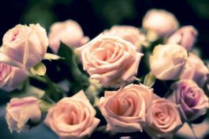 rosa Rosen als Hintergrund.