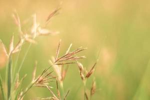 Gras vor einem grünen Hintergrund foto