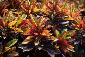 rote und orange Blätter foto