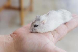 Person, die einen Hamster hält